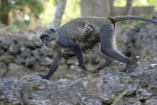 Free Monkey With Infant Royalty Free Stock Photos - 656998