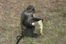 Free Monkey Eating Banana Stock Photography - 657032