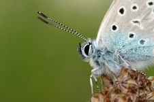 Free Portrait Of A Butterfly Royalty Free Stock Photos - 657178