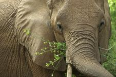 Free Elephant Stock Images - 657344