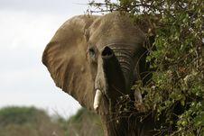 Free Elephant Stock Photos - 657473