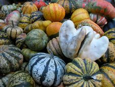 Free Pumpkins Royalty Free Stock Photography - 657597