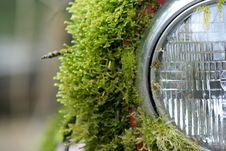 Mossy Headlight Stock Photos