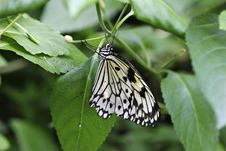 Free Butterfly Stock Images - 658224