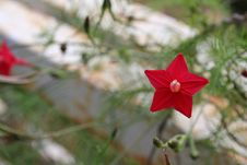 Free Tiny Star Flower Power Stock Photography - 658412