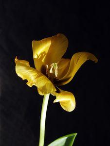 Free Yellow On Black Stock Photo - 658610