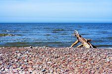 Free Driftwood Royalty Free Stock Image - 658706