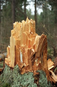 Free New Stump Stock Photography - 658742