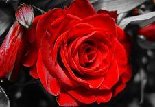 Free True Love Royalty Free Stock Photo - 658815
