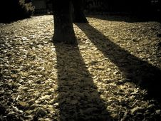 Free Long Shadows Stock Photography - 658832