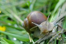 Free Snail Stock Photo - 658840