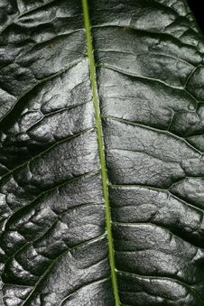 Free Big Green Leaf Royalty Free Stock Image - 659206