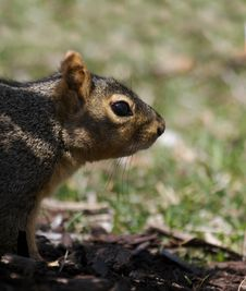 Free Squirrel Stock Photography - 659502