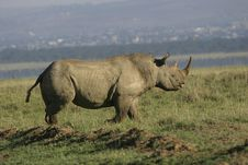 Free White Rhino Stock Photos - 659533