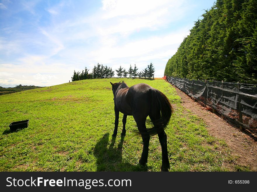 Horse turning his back in a field