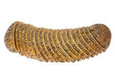 Free Multi-grain Bread On White. Stock Images - 6500224