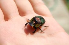 Free Beetle On My Hand Royalty Free Stock Photo - 6500715
