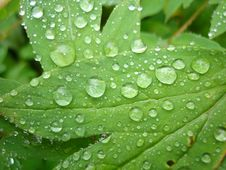 Free Dew Drops Royalty Free Stock Photography - 6501167