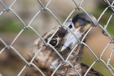 Free Eurasian Black Vulture Stock Images - 6502504