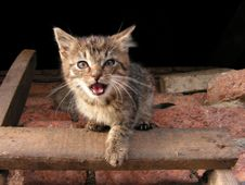 Free Action Kitten Stock Images - 6504334