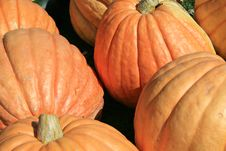 Free Orange Pumpkins Royalty Free Stock Image - 6504596