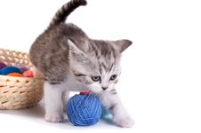 Free Kitten Plays On A White Background Royalty Free Stock Photography - 6504617