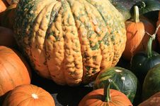Free Variety Of Pumpkins Stock Photos - 6504633