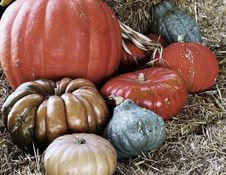 Free Eight Halloween Pumpkins In Hay Stock Photography - 6504992