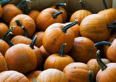 Free Halloween Pumpkins Stock Images - 6505124