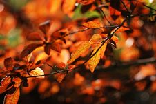 Free Autumn Leaves Royalty Free Stock Image - 6506386