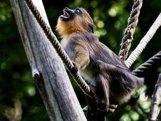 Monkey In Zoo Budapest Stock Image