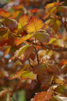 Free The Color Orange Leaves On The Tree Royalty Free Stock Photo - 6507195