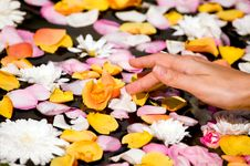 Free Woman Touching Flower Petals Stock Photography - 6507682