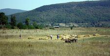 Free Haymaking Royalty Free Stock Image - 6508226