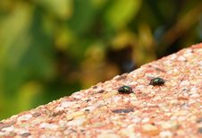 Two Green Flies Royalty Free Stock Photo