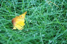 Free Green Grass Royalty Free Stock Photos - 6508598