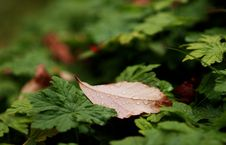 Free Fall Leaves Royalty Free Stock Photos - 6508868