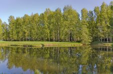 Free Birch Forest Near Lake Royalty Free Stock Image - 6509096