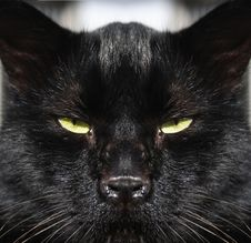 Free Catseyes Stock Image - 6509171