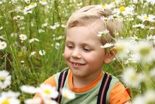Free 3 Years Boy On Daisy Field Royalty Free Stock Photography - 6509467