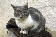 Free Kitten Sitting Royalty Free Stock Photo - 6509615