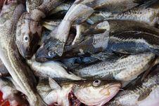 Free Fish Market Royalty Free Stock Photography - 6509957