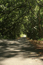 Free Trees Growin Over Road Way Royalty Free Stock Photo - 6516435