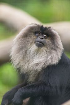 Free Monkey Royalty Free Stock Photo - 6510585