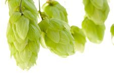 Free Hop Royalty Free Stock Photo - 6511405