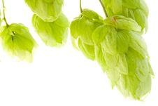 Free Hop Stock Images - 6511424