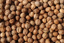 Free Walnuts Stock Photos - 6511553