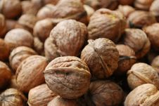 Free Walnuts Stock Photography - 6511792