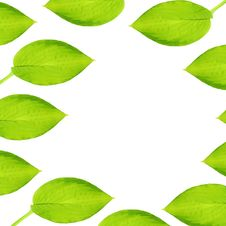 Free Hosta Leaf Abstract Stock Photography - 6511832