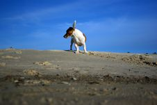 Free Summer Fun With Terrier Stock Photography - 6513352